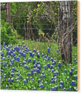 Fenced In Bluebonnets Wood Print