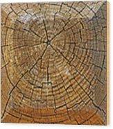 Fencepost Top 2 Wood Print