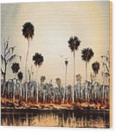 Fenholloway River Florida Wood Print