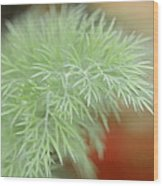 Fennel Plant Wood Print