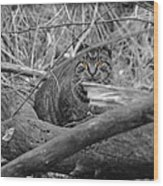 Feral Cat Wood Print