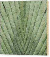 Fern - Chalk Wood Print