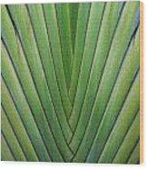 Fern - Colored Photo 1 Wood Print