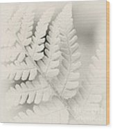 Fern Leaf Wood Print