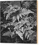 Fern 8664 Wood Print