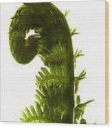 Fern Curve Wood Print