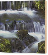 Fern Falls - 31 Wood Print