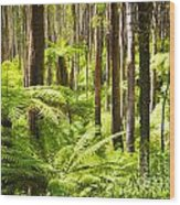 Fern Forest Wood Print