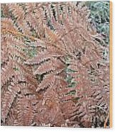 Fern Frond Frosted Wood Print