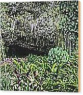 Fern Grotto Wood Print