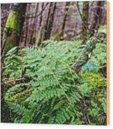 Fern In Forest Wood Print
