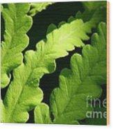 Fern In Sunlight Wood Print by Sandra Cunningham