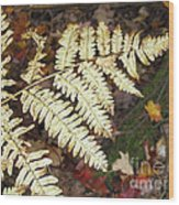 Fern In The Forest Wood Print