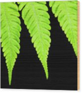 Fern Isolated On Black Background Wood Print