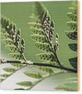 Fern Seeds Wood Print