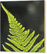 Fern Tip Wood Print