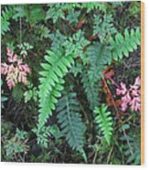 Ferns Along The Columbia River Wood Print