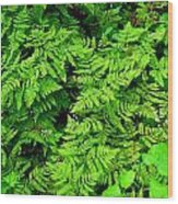 Ferns And Fauna Wood Print by T C Brown