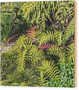 Ferns And More Wood Print