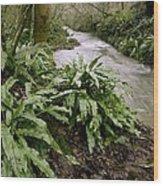 Ferns (asplenium Scolopendrium) Wood Print