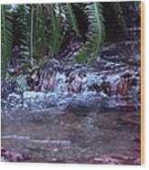 Ferns Dancing Wood Print