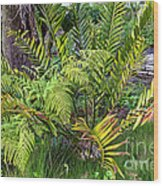 Ferns II Wood Print