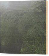 Ferns In Mist Wood Print