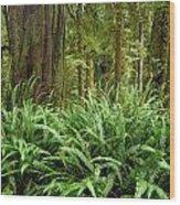 1a2912-ferns In Rain Forest Canada  Wood Print