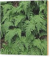 D3b6333-ferns In Sonoma 2  Wood Print