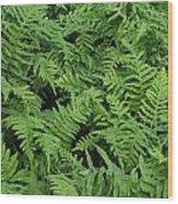 D3b6327-ferns In Sonoma Wood Print