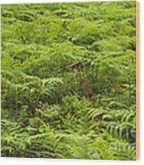 Ferns In Summer Wood Print