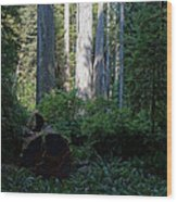 Ferns Of The Redwood Forest Wood Print