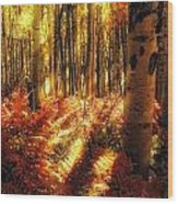 Ferns On The Forest Floor Wood Print