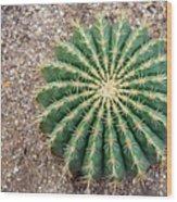 Ferocactus Histrix Cactus Wood Print