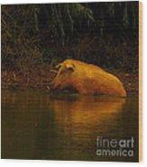 Ferrell Hog At Sunrise Wood Print