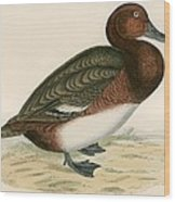 Ferruginous Duck Wood Print