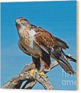 Ferruginous Hawk About To Take Wood Print
