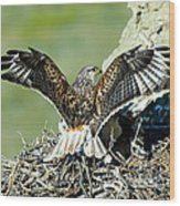 Ferruginous Hawk Male At Nest Wood Print