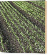 Fertile Farmland Wood Print