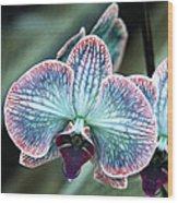 Festive Orchid Wood Print