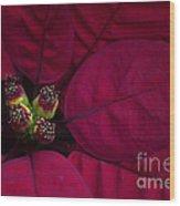 Festive Red Wood Print