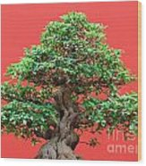 Ficus Bonsai Wood Print