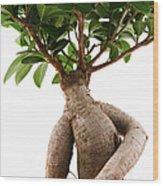 Ficus Ginseng Wood Print
