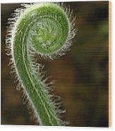Fiddlehead Fern Curl Wood Print