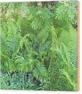 Fiddlehead Ferns Wood Print