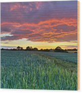 Field At Sunset Wood Print