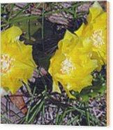 Field Cactus Wood Print