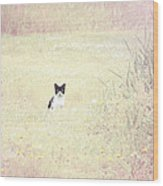 Field Cat Wood Print