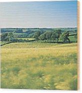 Field Near Barnstaple, North Devon Wood Print