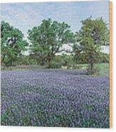 Field Of Bluebonnet Flowers, Texas, Usa Wood Print